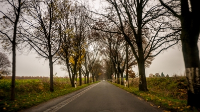 allee copyright 2013 andreas reich