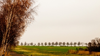 herbst allee copyright 2013 andreas reich