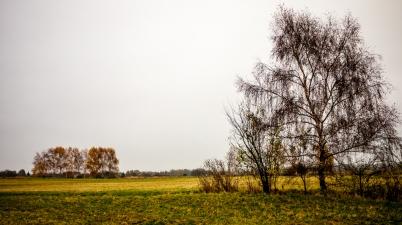 baum und bäume copyright 2013 andreas reich