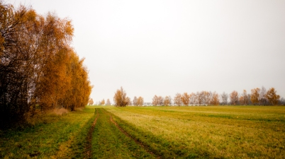 herbst grenze copyright 2013 andreas reich